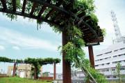 メディカル・リハビリホームボンセジュール千葉(介護付有料老人ホーム(一般型特定施設入居者生活介護))の画像(10)屋上庭園