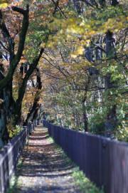 せらび小金井(サービス付き高齢者向け住宅(一般型特定施設入居者生活介護))の画像(7)