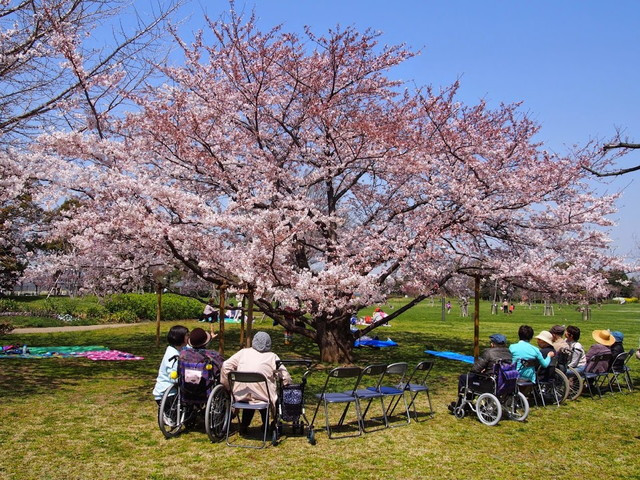舞浜倶楽部富士見サンヴァーロ(介護付有料老人ホーム)の画像(12)桜の季節の外出