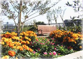 フローレンスケア芦花公園(介護付有料老人ホーム)の画像(6)屋上の花壇