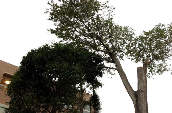 ココファン春日部(サービス付き高齢者向け住宅)の画像(16)庭園③