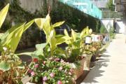 リハビリホームまどか中浦和(介護付有料老人ホーム(一般型特定施設入居者生活介護))の画像(6)1F 中庭
