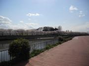 蒲生めいせい(介護付有料老人ホーム)の画像(9)綾瀬川沿いのお散歩道