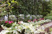 メディカルホームまどか武蔵浦和(介護付有料老人ホーム(一般型特定施設入居者生活介護))の画像(8)1F 中庭