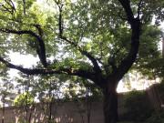 アライブ久が原(介護付有料老人ホーム)の画像(15)