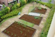 メディカルホームまどか草加(介護付有料老人ホーム(一般型特定施設入居者生活介護))の画像(8)中庭と畑