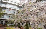フェリオ多摩川(介護付有料老人ホーム)の画像(7)桜の時期の中庭