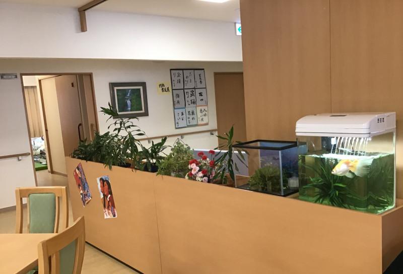 アミカの郷川口(介護付有料老人ホーム)の画像(3)水槽