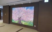 チャームスイート京王聖蹟桜ヶ丘(介護付有料老人ホーム)の画像(6)