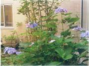 有料老人ホーム シェモア西台(介護付有料老人ホーム(一般型特定施設入居者生活介護))の画像(27)1F中庭