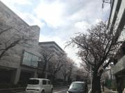 スマイラス聖蹟桜ヶ丘(サービス付き高齢者向け住宅)の画像(4)建物の目の前の桜並木