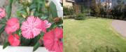 サービス付き高齢者向け住宅 いちごホーム(サービス付き高齢者向け住宅)の画像(14)お庭が広いです