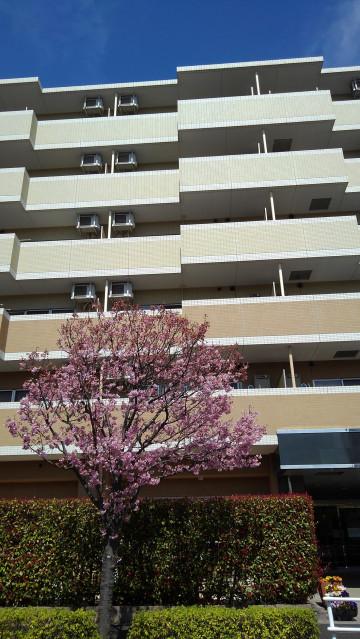 ヴェルジェ新横浜Ⅲ なしの郷の画像