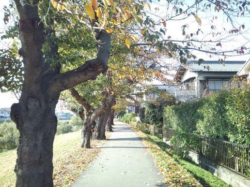 ハーウィル北越谷(サービス付き高齢者向け住宅)の画像(19)