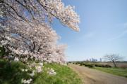 介護付有料老人ホーム 東急ウェリナケア尾山台(介護付有料老人ホーム)の画像(5)多摩川