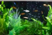 ファミニューすみだ文花(介護付有料老人ホーム)の画像(11)熱帯魚が居ます