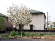 ソレイユひばりが丘(サービス付き高齢者向け住宅)の画像(15)