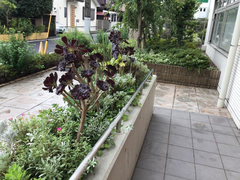 グレイプスガーデン西新井大師(サービス付き高齢者向け住宅)の画像(3)