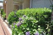 ボンセジュール四つ木(介護付有料老人ホーム(一般型特定施設入居者生活介護))の画像(10)玄関外側