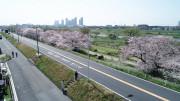 グランジュール尾山台(サービス付き高齢者向け住宅)の画像(11)季節の色 桜
