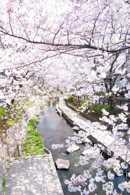 ネクサスコート多摩川桜並木(介護付有料老人ホーム)の画像(10)周辺環境