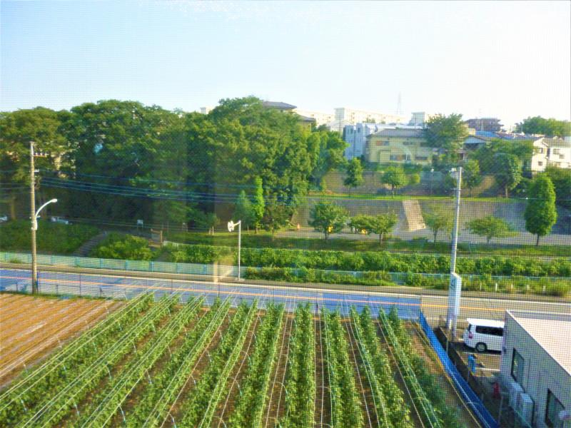 カーサプラチナ宮前平(住宅型有料老人ホーム)の画像(30)景色
