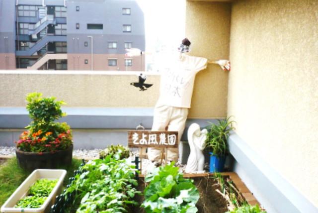浅草ケアパークそよ風(介護付有料老人ホーム(一般型特定施設入居者生活介護))の画像(2)家庭菜園