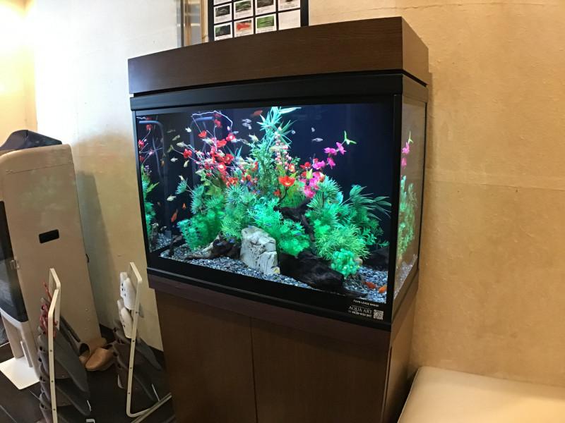 クラシックガーデン文京根津(介護付有料老人ホーム)の画像(16)1階水槽