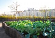 SOMPOケア ラヴィーレあざみ野(介護付有料老人ホーム)の画像(8)屋上庭園