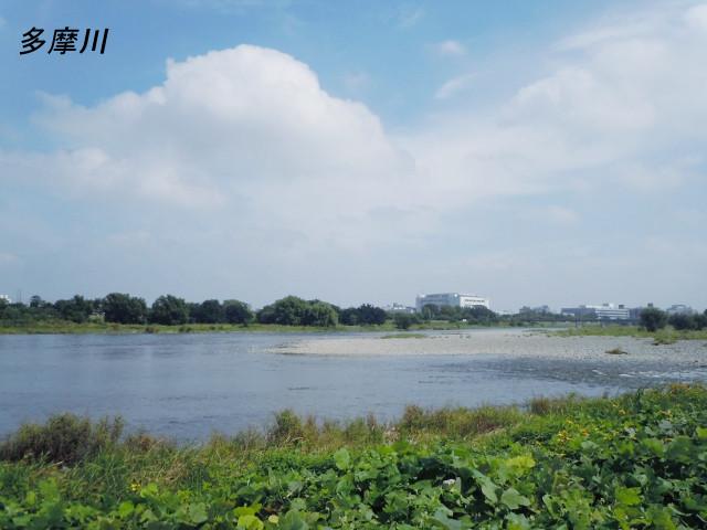 シルバーシティ聖蹟桜ヶ丘(介護付有料老人ホーム)の画像(29)多摩川外観