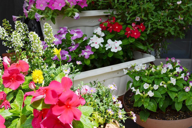 メディカルホームまどかときわ台北(介護付有料老人ホーム(一般型特定施設入居者生活介護))の画像(7)花壇