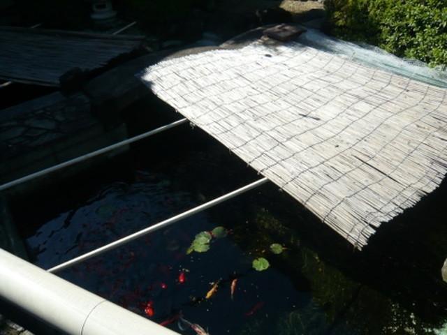 シルバーシティ石神井北館庭の池